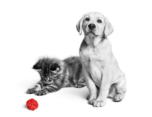 Kitten and puppy playing with ball